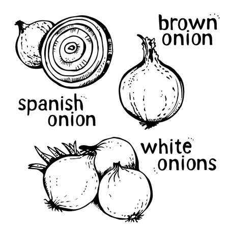 Onion vector set of hand drawn line art illustration, isolated on white background 向量圖像