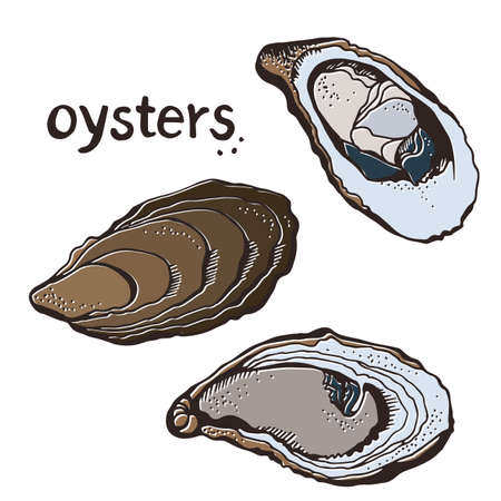 Oysters vector set, hand drawn illustration isolated on a white background