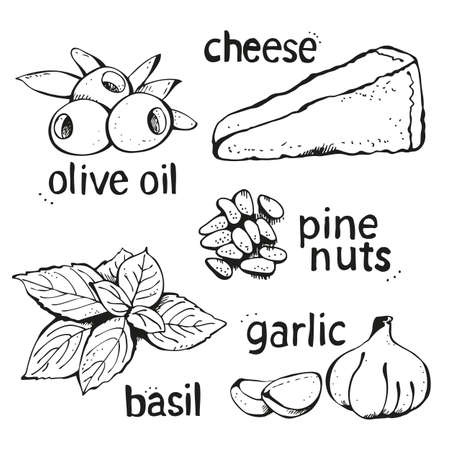 Vector set of ingredients for Italian pesto sauce isolated on a white background
