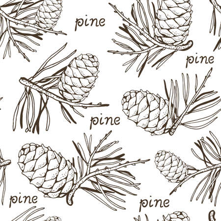 Pine cedar cone with a sprig, vector seamless hand drawn background