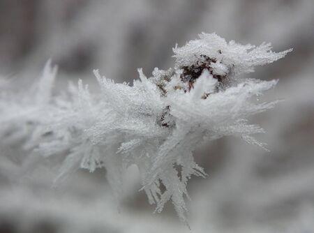 Close up of frozen plant
