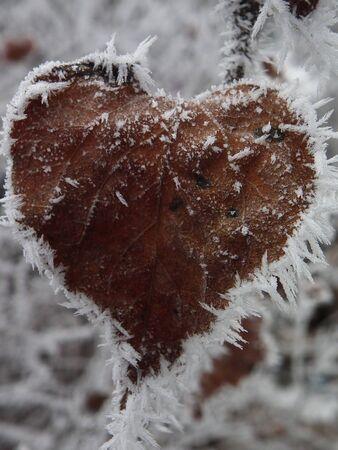 Frozen heart-shape leaf