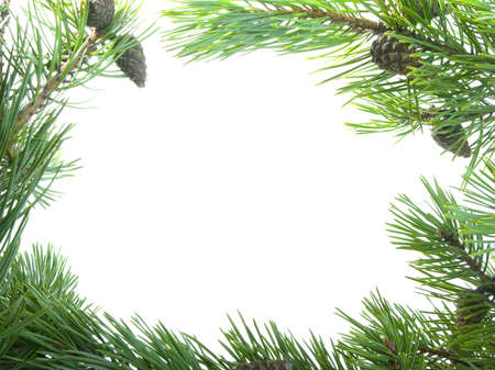 green branches of the pine,embellishment cristmas,white background