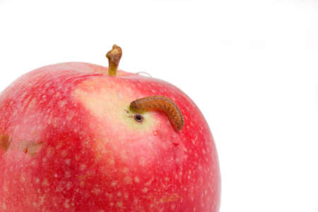 fruit worm: red juicy apple,spoiled agricultural vermin,worm