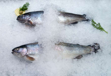 coolled fish, fresh bright trout,sale seafood photo