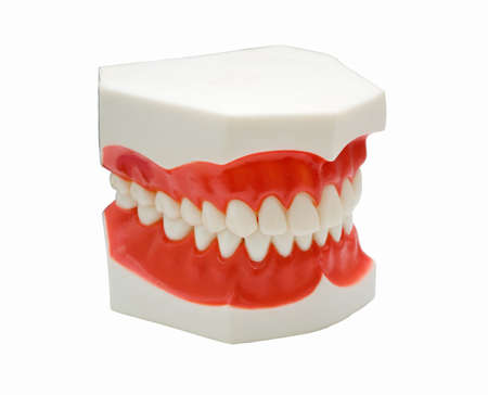 fix jaw: teeth mold and prosthetic devices. cabinet to stomatologies Stock Photo