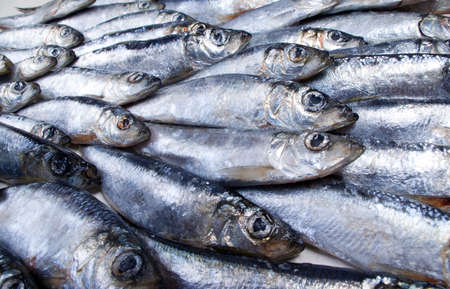 visboer: verse haring gevangen in de Witte sea.Close-up Stockfoto