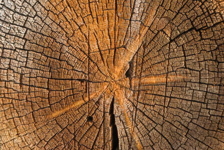 sawed: close-up wooden cut texture.wood background Stock Photo