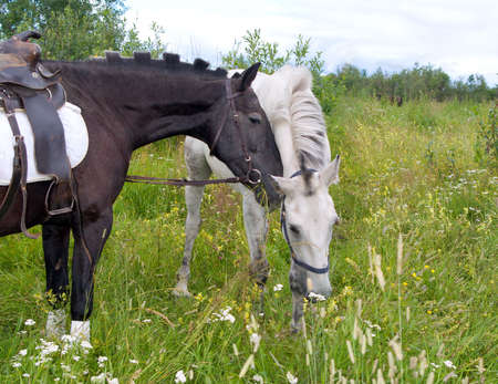 Two horses.Horses on a pasture photo
