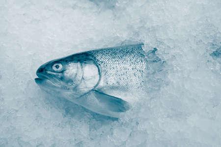 visboer: coolled vis, frisse heldere forel, verkoop seafood.monochrome  Stockfoto