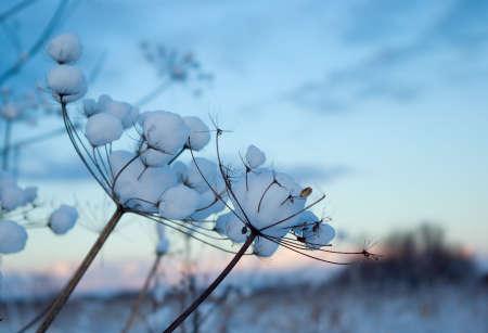 Winter landscape.Winter scene  photo
