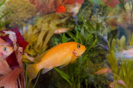 A colourful aquarium.decorative fish photo