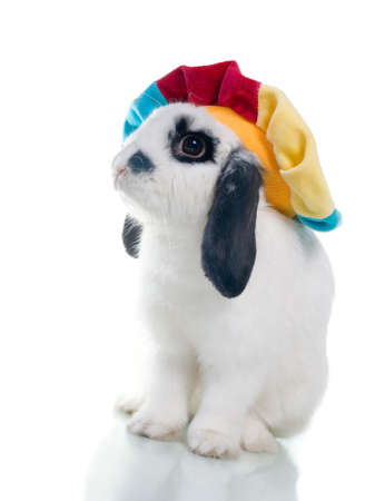 Cute easter rabbit close-up isolated on a white background.rabbit in hat photo