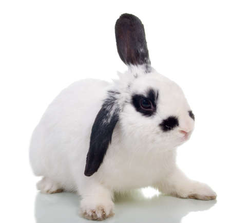 Rabbit in front of a white background photo