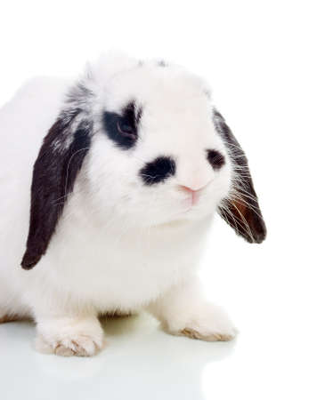 Easter. The rabbit isolated on a white background. photo