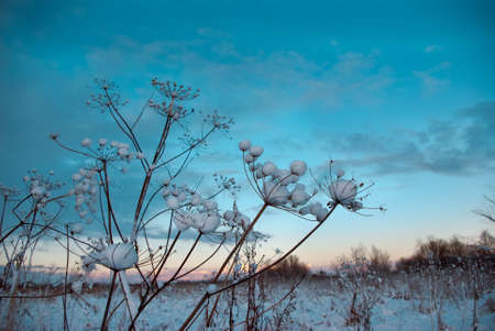 Winter landscape.Winter scene .frozenned flower Stock Photo - 8303575