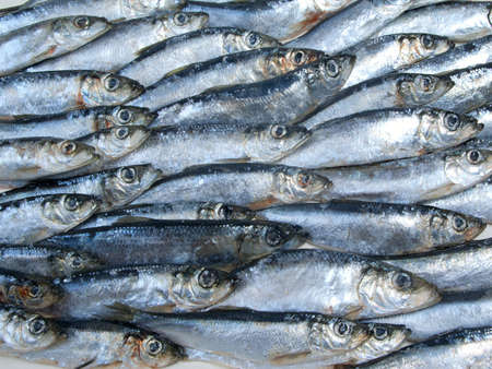 fished: fresh herring fished out in White sea Stock Photo