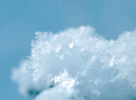 Winter landscape.Frozenned flower.Shallow depth-of-field photo
