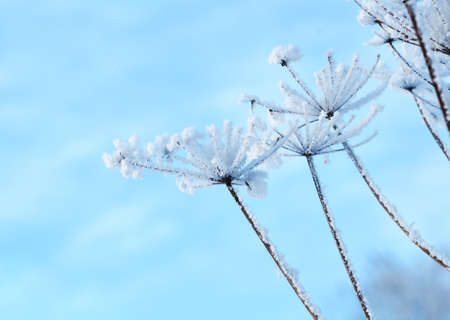 Winter landscape Winter scene  Frozenned flower photo