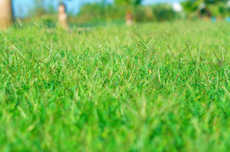 grassplot: tropical garden  close-up