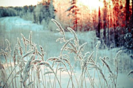paisagem: Flores congeladas Banco de Imagens