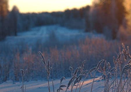 frozenned: Winter scene .Frozenned flower