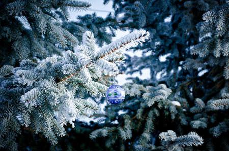 branche sapin noel: brillante boule de No�l � partir d'un couvert de neige branche d'arbre de No�l