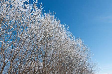 frozen trees: Winter landscape. frozen trees. a bright sunny day Stock Photo