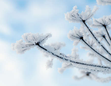 Winter landscape.Winter scene .Frozenned flower Stock Photo
