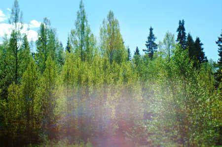 nature green: �rboles forestales. naturaleza madera verde la luz del sol Foto de archivo