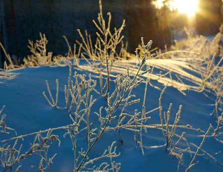 frozenned: Winter landscape.Winter beauty scene