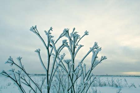 frozen trees: Frozen trees in snowy field.Winter landscape. Stock Photo