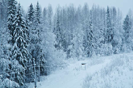 carrying: Winter landscape.snow-covered cable carrying electrical power Stock Photo