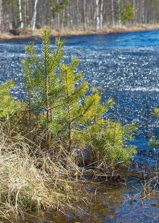 granizados: Paisaje de primavera rusa con aguanieve flooded.icy en el agua del lago. de cerca Foto de archivo