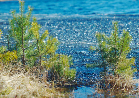 granizados: Russian  Spring landscape with flooded.icy slush on the water of the lake. close up Foto de archivo