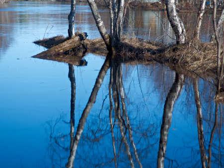 flooding: Russian landscape.Spring flooding on the river  Arkhangelsk region
