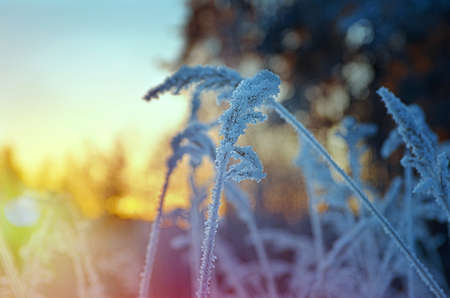 frozenned: Winter scene .Frozenned flower on background sunrise Stock Photo