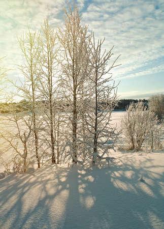 frozenned: Winter  snowdrift landscape.Winter scene