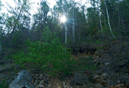 buryatia: Coast Forest Lake Baikal . Buryatia Stock Photo
