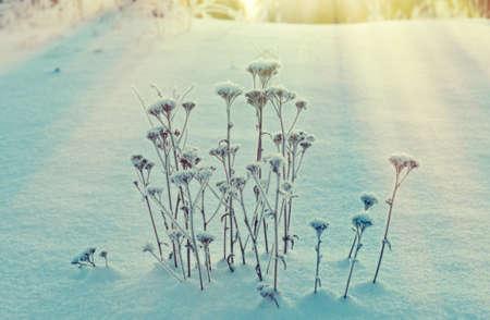 frozenned: Winter landscape.Winter beauty scene.frozen flower