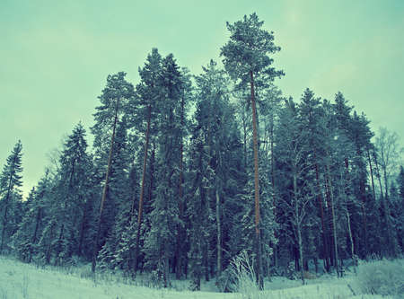 frozenned: Winter landscape.frozen taiga forest