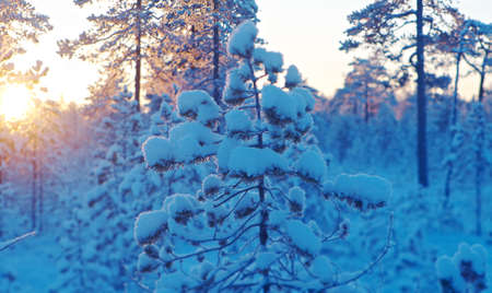 Winter snowy forest at sunset. Beautiful Christmas landscape Imagens