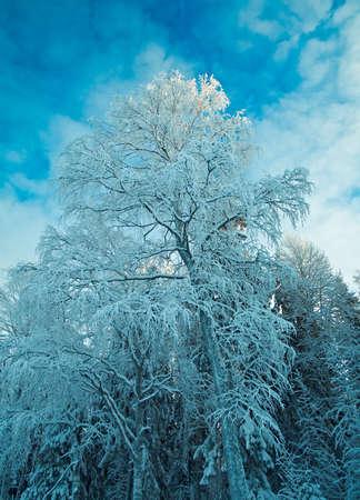 snowdrifts: Winter landscape.Winter beauty scene