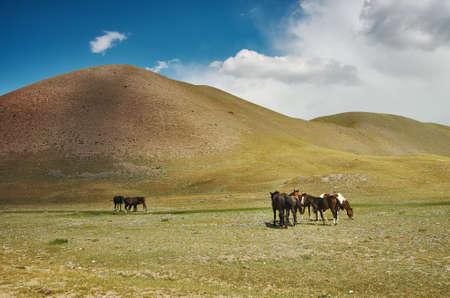 Grazing horses , Alay Valley of Osh Region, Kyrgyzstan Stock Photo
