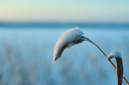 Winter  Beautiful Christmas landscape, snow reed against a sunset, Shallow depth-of-field 스톡 콘텐츠 - 114976334