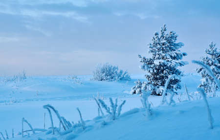 Beautiful Christmas landscape? winter landscape with the pine forest seaside dunes