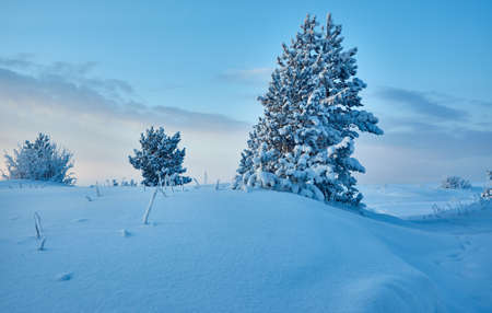 Beautiful Christmas landscapeD± winter landscape with the pine forest seaside dunes Stock Photo