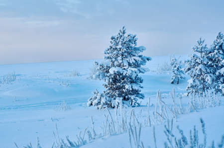 Beautiful Christmas landscape,  winter  pine forest seaside dunes