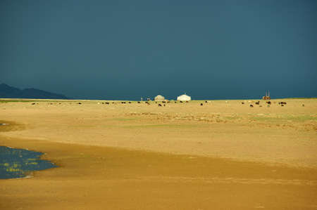 Mongolia. Sands Mongol Els dunes . Herds graze in the spring green valley, Stormy dramatic sky