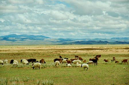 Pastos de Mongolia en la zona del río Zavkhan, río en el Govi-Altai de Mongolia Foto de archivo